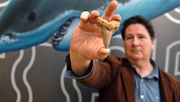 """Einfach perfekt"": Hobby-Fossiliensammler Philip Mullaly (Bild: AFP )"