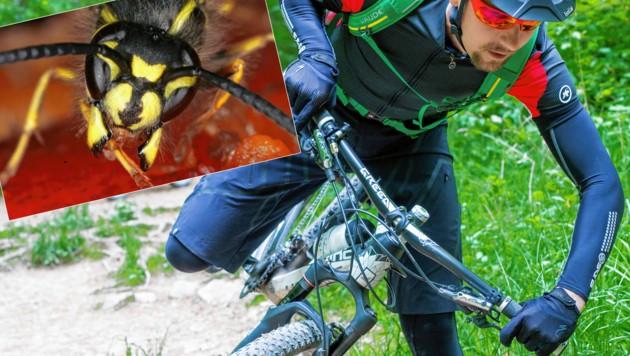 Fahrradsturz durch Wespenstich (Symbolbild) (Bild: ÖRK/Thomas Holly Kellner; AP)