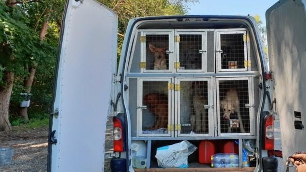 21 Mischlinge auf einen Schlag kamen von Ungarn in die Grazer Arche Noah: Sie waren alle in kleinen Käfigen in diesem Transporter, viele Stunden lang! (Bild: Radspieler Jürgen)
