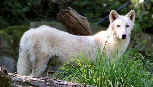 (Bild: Tierwelt Herberstein)