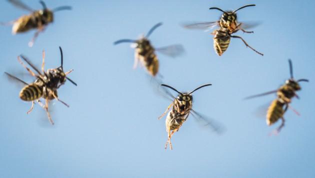 Kommt es zum Wespenstich, kann das Gift mit Hitze zerstört werden.Danach helfen kühlende Gels und entzündungshemmende Salben. (Bild: APA/dpa/Frank Rumpenhorst)