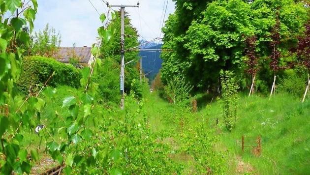 Die Bahntrasse zwischen Vordernberg und Trofaiach ist derzeit völlig überwuchert. (Bild: Land Steiermark)