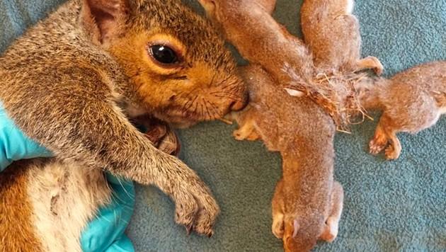 Heimliche Eichhörnchen