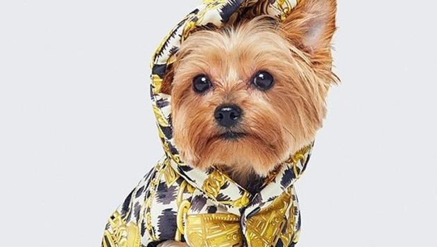 H&M x Moschino macht Hunde zu echten Fashion-Stars. (Bild: instagram.com/moschino)