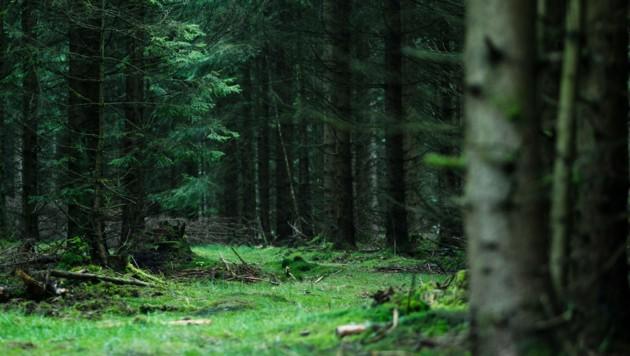 Ein Forstweg führt in ein Waldstück, in dem die Überreste der Leiche gefunden wurden. (Bild: APA/dpa/Nicolas Armer)