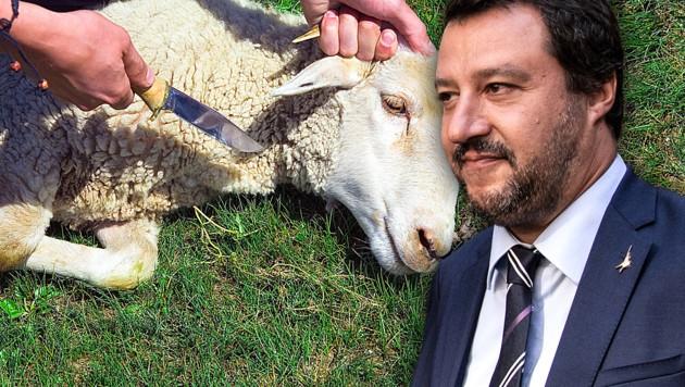 Lega-Chef Matteo Salvini (Bild: AFP, stock.adobe.com, krone.at-Grafik)