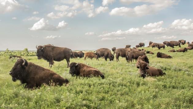 Maxwell Wildlife Preserve (Bild: Andrea LaRayne Etzel 2015)