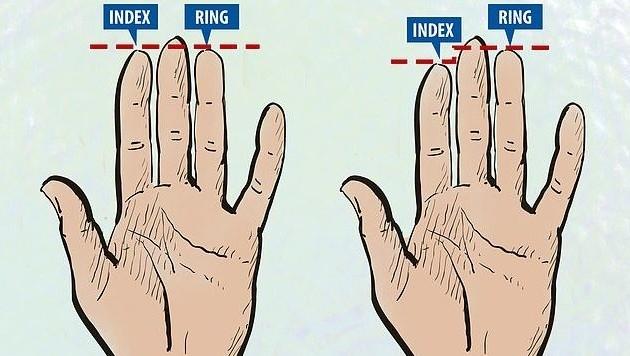 Die Hand eines Heterosexuellen (links) im Vergleich zu der Hand eines Homosexuellen (rechts)