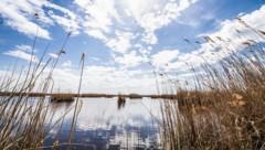 Blick über den Neusiedler See (Bild: stock.adobe.com)