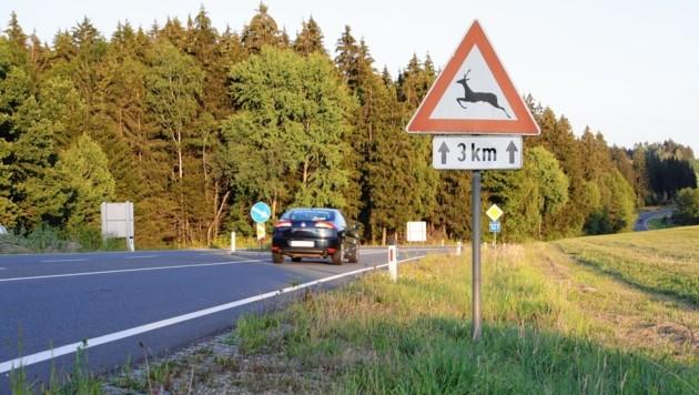 Alle zwei Stunden ereignet sich auf Kärntens Straßen ein Wildunfall. Im Herbst ist besondere Vorsicht angebracht. (Bild: OÖ Landesjagdverband)