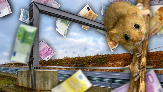 (Bild: Björn Schulz/Wikipedia, Wisberger/zema-foto.de, stock.adobe.com, krone.at-Grafik)