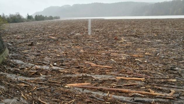 Entwurzelte Bäume und Holz bedecken die Drau in Lavamünd.