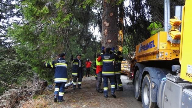 Forstarbeiter und Männer FF Metnitz haben den Baum verladen (Bild: Kirchenforste/Paul Brandstätter)