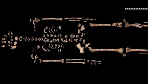Das Skelett der Heiligen vom Hemmaberg. Die Frau war zwischen 35 und 50 Jahre alt und lebte im 1. oder 2. Jahrhundert. (Bild: ÖAW/ÖAI/N. Gail)