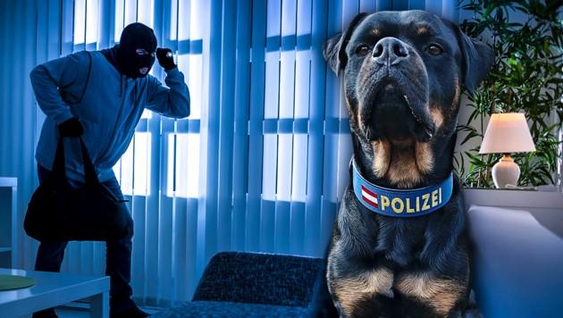 """Polizeihund """"Bennet"""" spürt Einbrecher-Duo auf"""