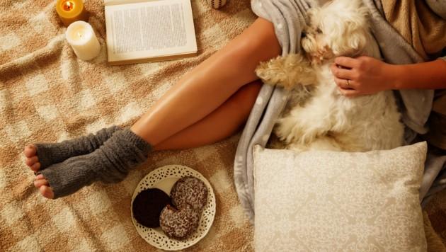 (Bild: ©Monika Wisniewska - stock.adobe.com)