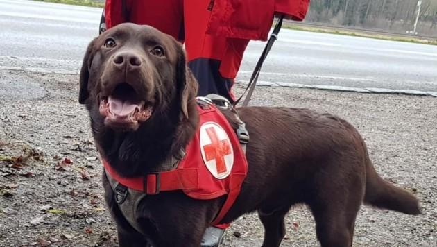 Symbolbild (Bild: Rotes Kreuz Oberösterreich)