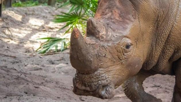 Eines der Tiere, die im Brevard Zoo leben (Bild: twitter.com)