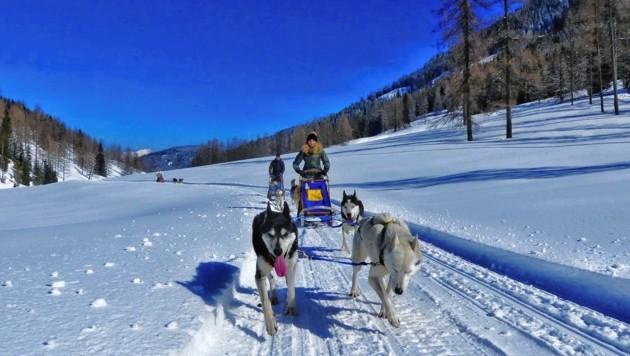 Auf der Dellacher Alm bei Hermagor geht es mit dem Husky-Schlitten durch die Natur. (Bild: www.huskycamp.at)