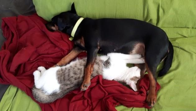 Auf diesem Foto waren beide Tiere noch am Leben. (Bild: ZVG)