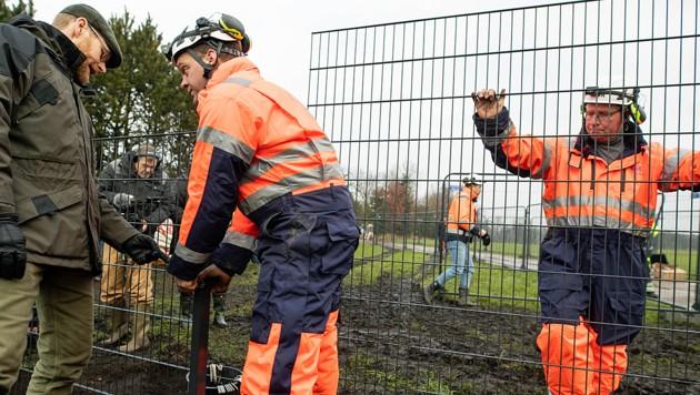 Angst Vor Schweinepest Danemark Baut Grenzzaun Krone At