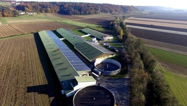"""15.000 Quadratmeter groß ist die """"Ferkel-Fabrik"""" in Hainsdorf. Doch weder eine UVP noch eine IPPC-Genehmigung liegen vor. Der VwGH sieht das Land Steiermark in der Pflicht. (Bild: IST/zVg)"""