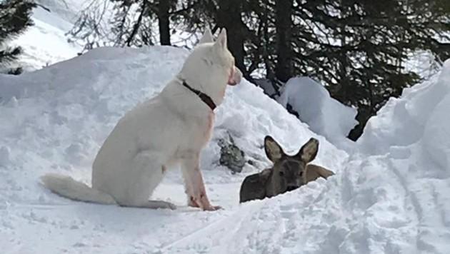 Turrach Polizei Folgte Wilderndem Hund Mit Skidoo Krone At