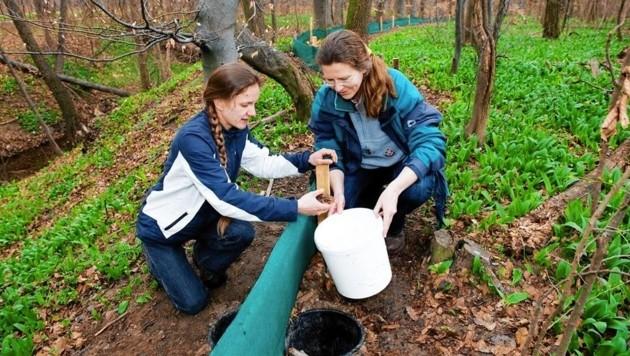 Freiwillige Helfer bringen die Amphibien, die sich in den Kübeln gesammelt haben, sicher auf die andere Straßenseite. (Bild: zVg)