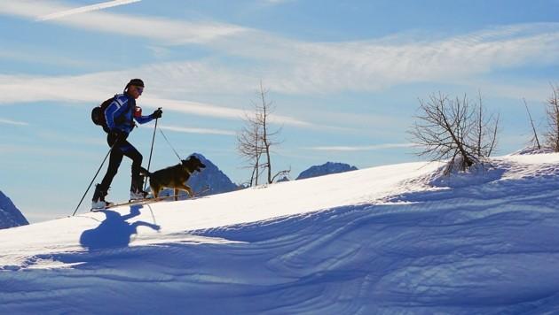"""Hund """"Aro"""" ist bei Peter-Pauls Touren immer mit dabei (Bild: Wallner Hannes/Kronenzeitung)"""