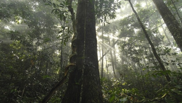 Der Regenwald: Eine bunte Schatzkammer voller einzigartiger Pflanzen- und Tierarten (Bild: Markus Mauthe/Greenpeace)