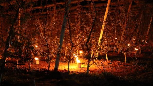 Frostöfen erhöhen die Temperaturen und schützen die Früchte (Bild: LKAnna Brugner)