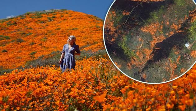 Blühende Wüste ist sogar aus dem Weltall sichtbar