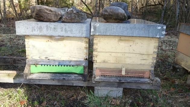 Fünf Bienenstöcke dieser Art wurden geklaut (Bild: zvg)