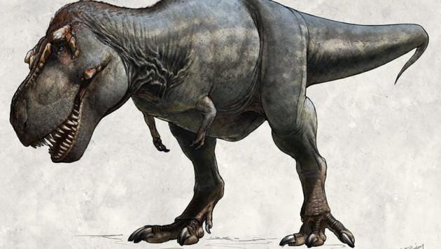 """Künstlerische Illustration: So könnte T. rex """"Scotty"""" ausgesehen haben. (Bild: The Royal Saskatchewan Museum/Beth Zaiken)"""