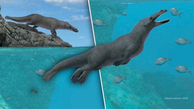 Fossil von Urzeit-Wal mit vier Beinen entdeckt