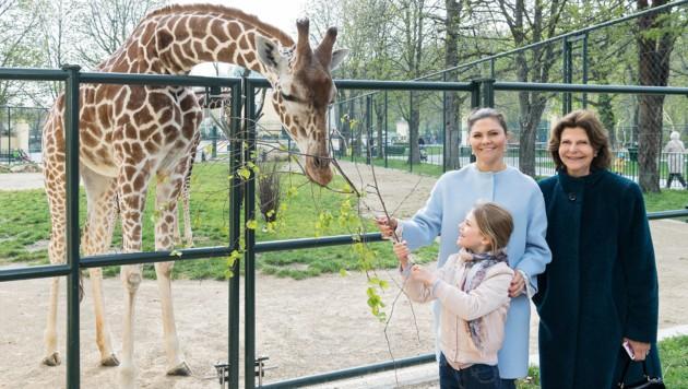 Auch für einen Besuch im Tiergarten Schönbrunn war Zeit. (Bild: Daniel Zupanc)