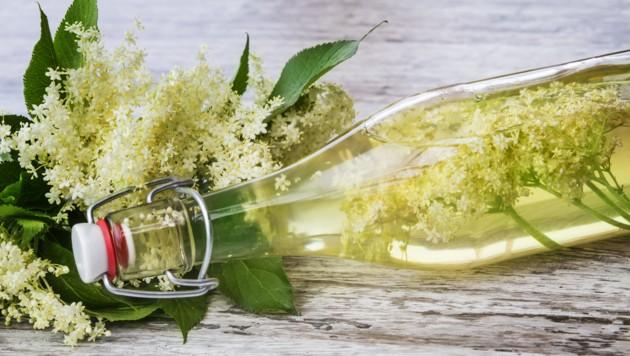 Was Sie über die Heilpflanze wissen sollten
