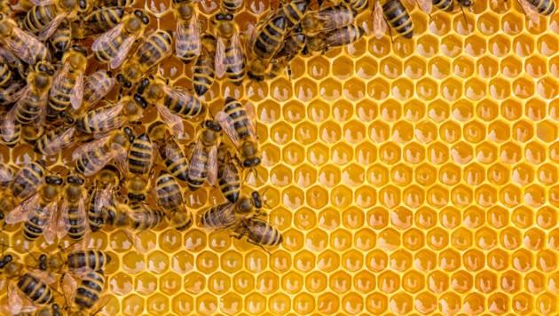 Symbolbild (Bild: © Jag_cz - stock.adobe.com)