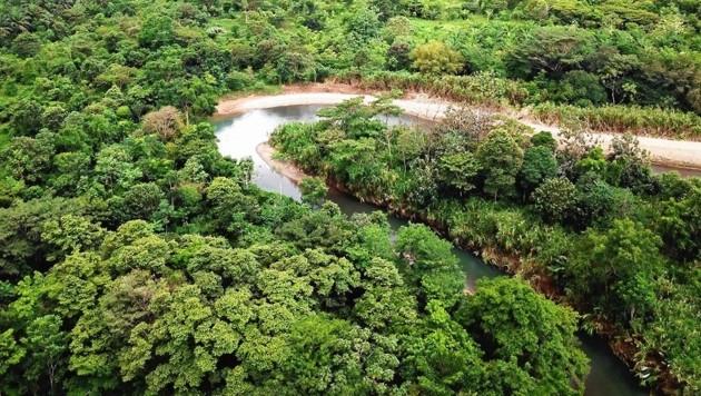 """40 Quadratkilometer Regenwald in Costa Rica konnten mit Spenden der """"Krone""""-Leser freigekauft und für immer vor der Zerstörung gerettet werden. (Bild: Regenwald der Österreicher)"""