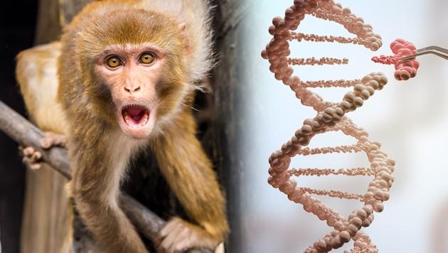 Forscher setzen menschliches Gen in Affenhirne ein