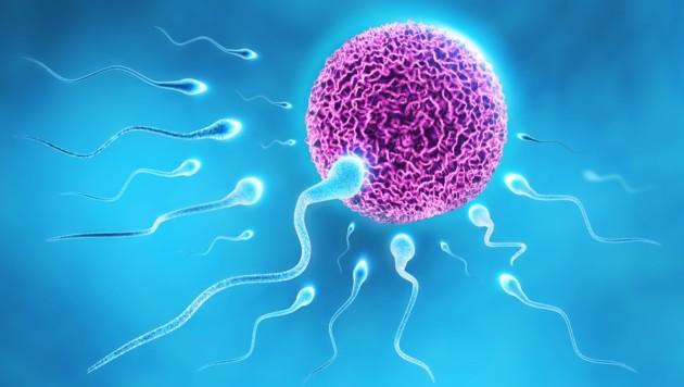 Das Erbmaterial der Samenzellen verändert sich im Laufe der Jahre. (Bild: twindesigner/stock.adobe.com)