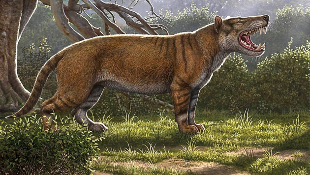 Das löwenähnliche Tier wog bis zu 1500 Kilogramm und war größer als ein Eisbär. (Bild: AFP/Ohio University/Mauricio Anton)