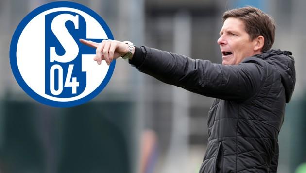 (Bild: GEPA/Walter Luger, FC Schalke 04, krone.at-Grafik)
