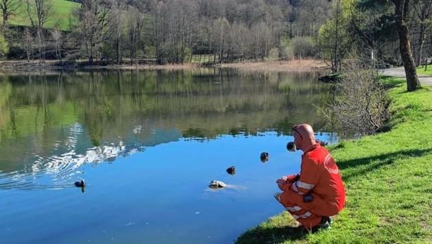 Die Ente wurde ans Ufer gelockt und von ihren Fesseln befreit. (Bild: Wasserrettung)