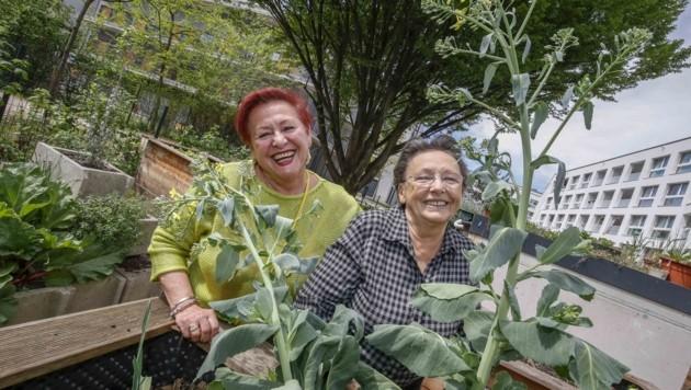 Ekatarina und Tilly (Bild: Tschepp Markus)