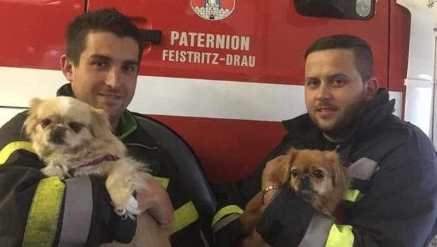 Diese Vierbeiner retteten die Feuerwehrmänner. (Bild: FF Feistritz/Drau)