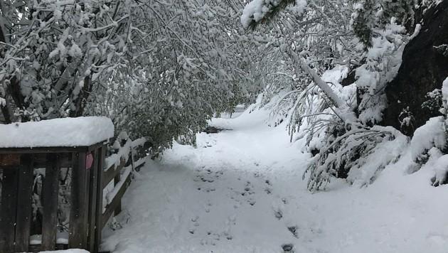 "Winter-Wonderland bei Helmut L: ""Grüße aus dem Außerfern"" (Bild: Leserreporter Helmut L.)"