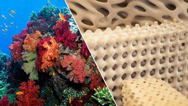 Forscher arbeiten an Riffen aus dem 3D-Drucker