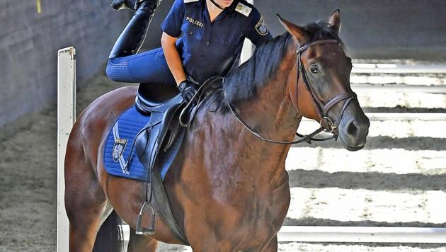 Eines der Polizeipferde beim Training in Wiener Neustadt (Bild: APA/Hans Klaus Techt)