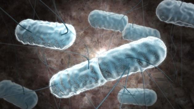 Künstlerische Darstellung von Listerien unter dem Mikroskop (Bild: stock.adobe.com)